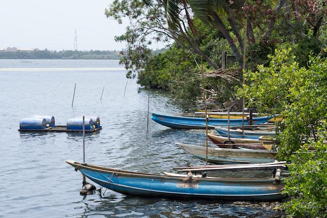 Srilanka Lagoon
